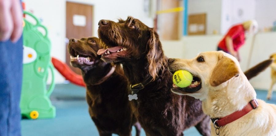 Canine Creche launches new franchise in Colchester