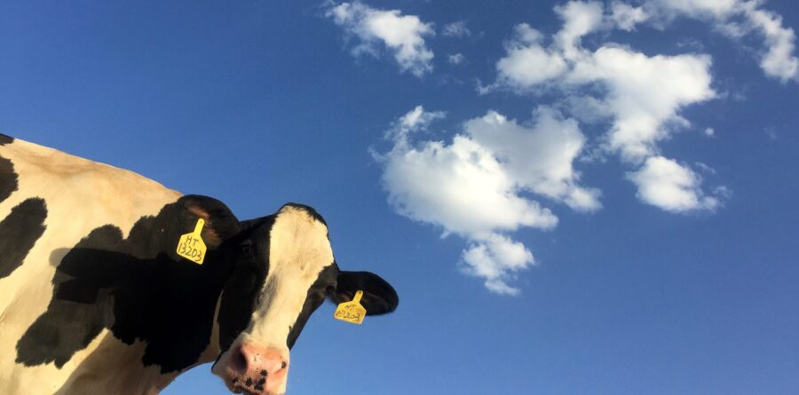 Cleaner mileage on manure – truck fills up with Vuorenmaa dairy farm's own biogas